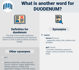 duodenum, synonym duodenum, another word for duodenum, words like duodenum, thesaurus duodenum