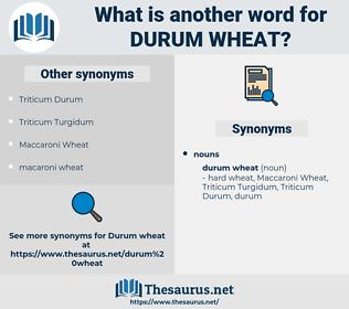 durum wheat, synonym durum wheat, another word for durum wheat, words like durum wheat, thesaurus durum wheat