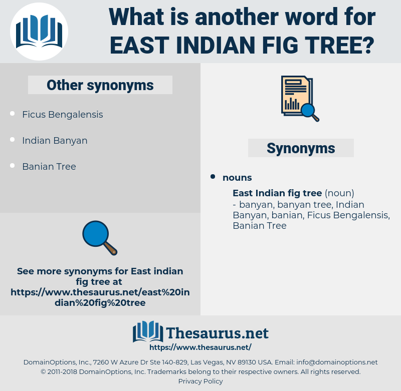 East Indian Fig tree, synonym East Indian Fig tree, another word for East Indian Fig tree, words like East Indian Fig tree, thesaurus East Indian Fig tree
