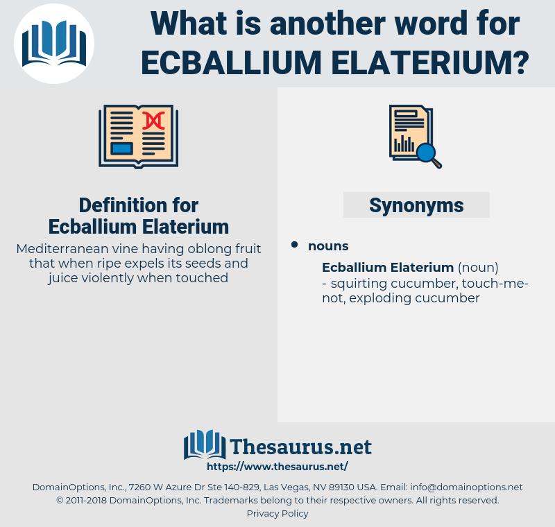 Ecballium Elaterium, synonym Ecballium Elaterium, another word for Ecballium Elaterium, words like Ecballium Elaterium, thesaurus Ecballium Elaterium