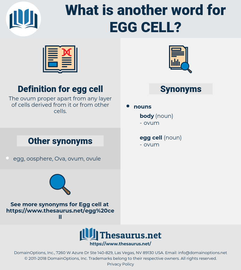 egg cell, synonym egg cell, another word for egg cell, words like egg cell, thesaurus egg cell