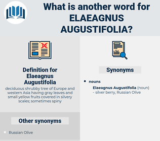 Elaeagnus Augustifolia, synonym Elaeagnus Augustifolia, another word for Elaeagnus Augustifolia, words like Elaeagnus Augustifolia, thesaurus Elaeagnus Augustifolia