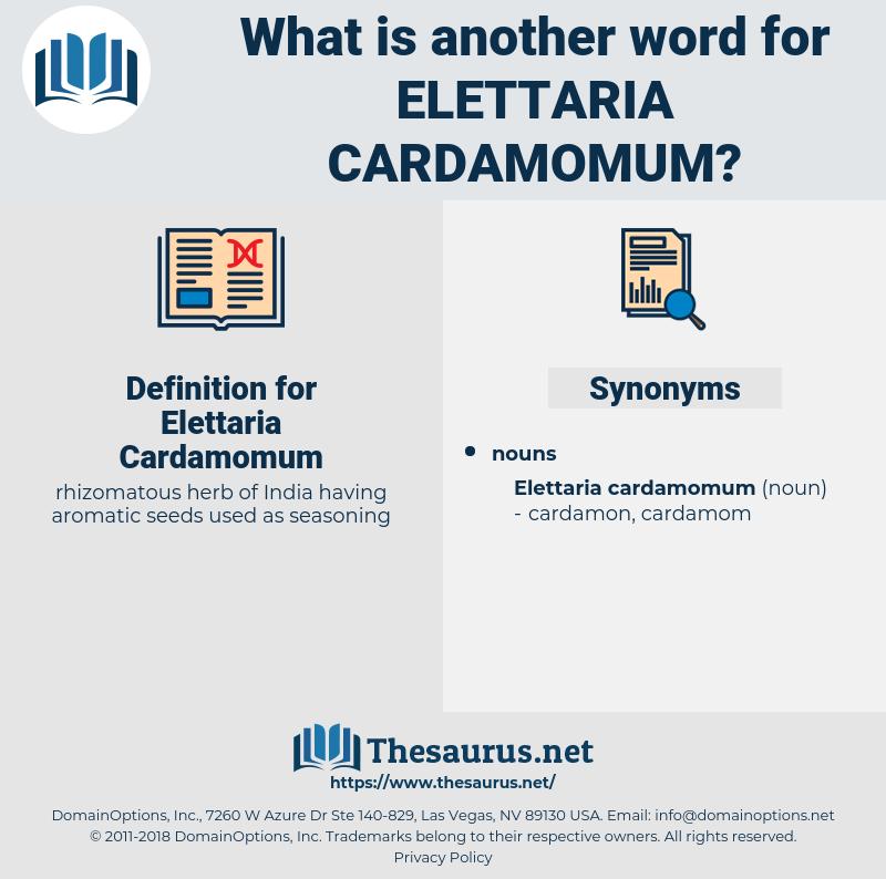 Elettaria Cardamomum, synonym Elettaria Cardamomum, another word for Elettaria Cardamomum, words like Elettaria Cardamomum, thesaurus Elettaria Cardamomum