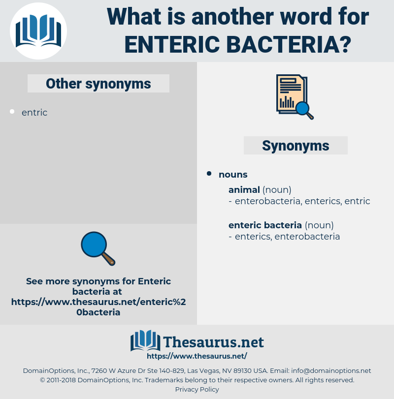 enteric bacteria, synonym enteric bacteria, another word for enteric bacteria, words like enteric bacteria, thesaurus enteric bacteria