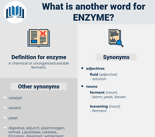 enzyme, synonym enzyme, another word for enzyme, words like enzyme, thesaurus enzyme