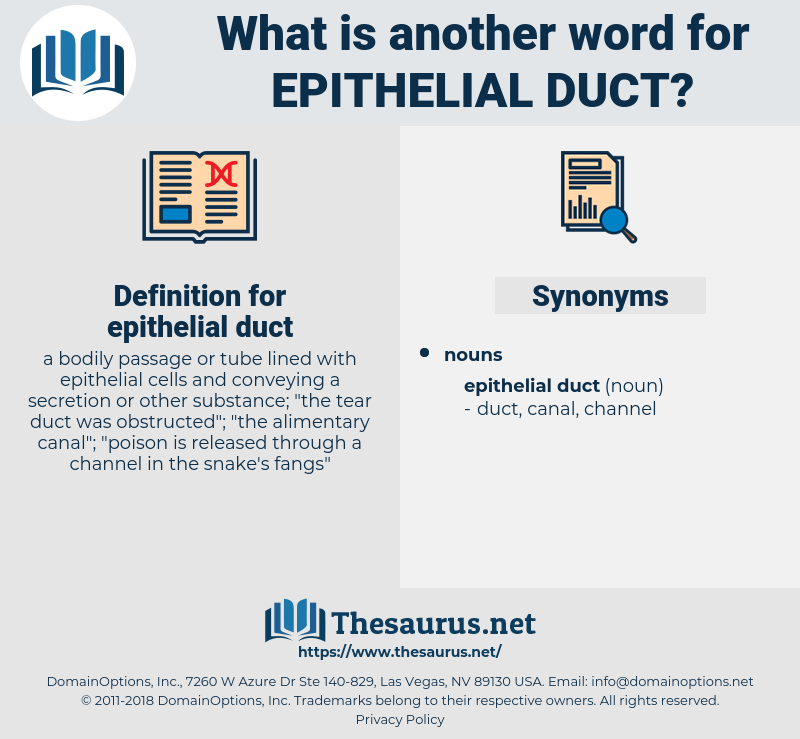 epithelial duct, synonym epithelial duct, another word for epithelial duct, words like epithelial duct, thesaurus epithelial duct
