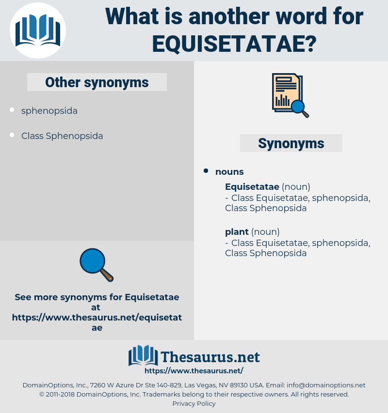 equisetatae, synonym equisetatae, another word for equisetatae, words like equisetatae, thesaurus equisetatae