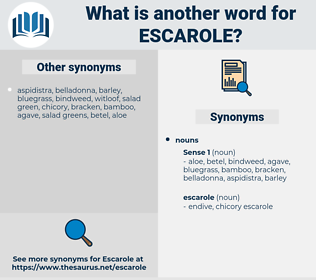 escarole, synonym escarole, another word for escarole, words like escarole, thesaurus escarole