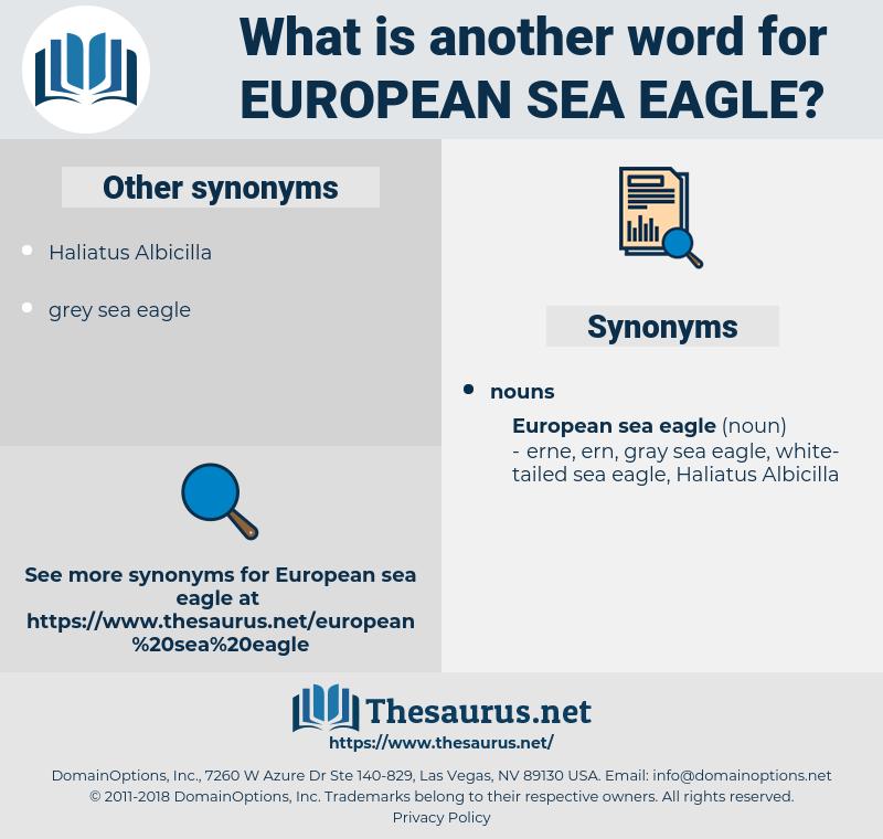 European Sea Eagle, synonym European Sea Eagle, another word for European Sea Eagle, words like European Sea Eagle, thesaurus European Sea Eagle