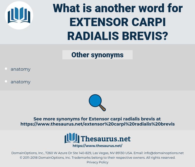 extensor carpi radialis brevis, synonym extensor carpi radialis brevis, another word for extensor carpi radialis brevis, words like extensor carpi radialis brevis, thesaurus extensor carpi radialis brevis