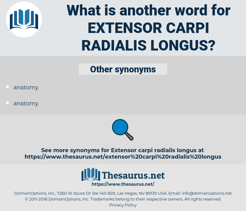 extensor carpi radialis longus, synonym extensor carpi radialis longus, another word for extensor carpi radialis longus, words like extensor carpi radialis longus, thesaurus extensor carpi radialis longus