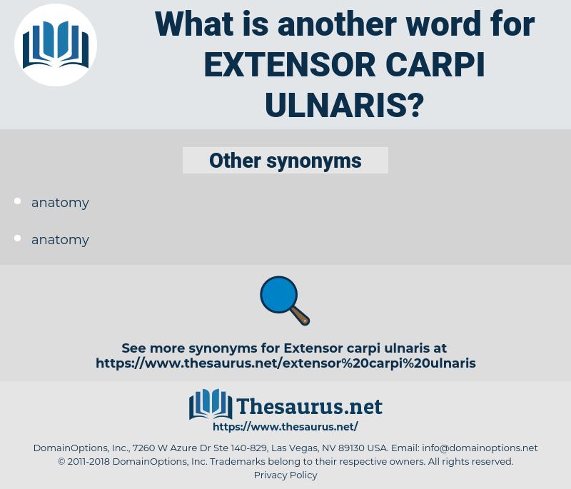 extensor carpi ulnaris, synonym extensor carpi ulnaris, another word for extensor carpi ulnaris, words like extensor carpi ulnaris, thesaurus extensor carpi ulnaris