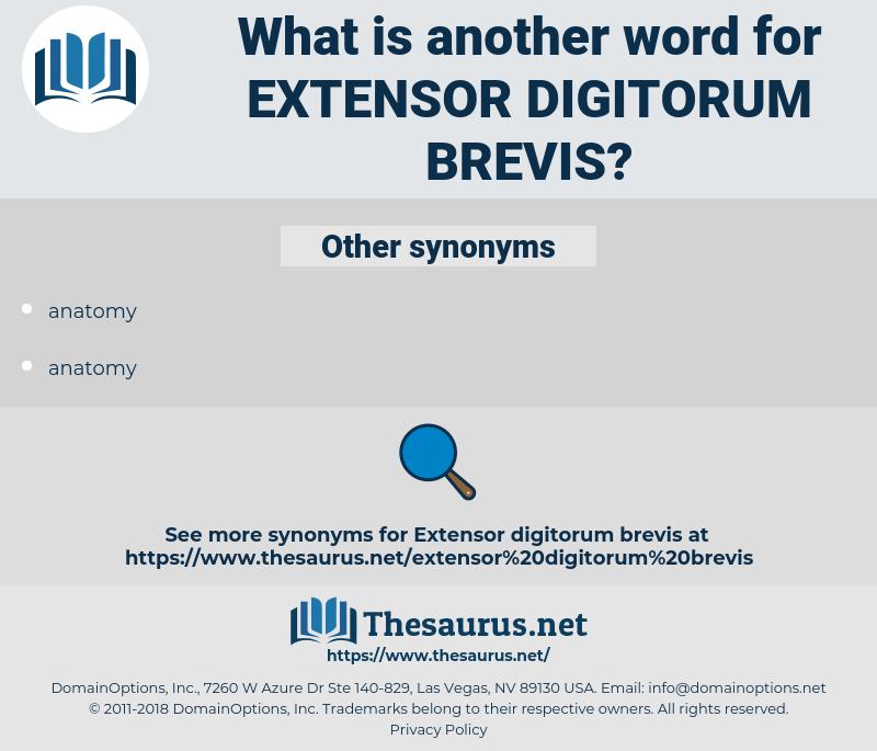 extensor digitorum brevis, synonym extensor digitorum brevis, another word for extensor digitorum brevis, words like extensor digitorum brevis, thesaurus extensor digitorum brevis