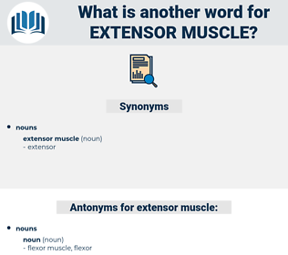 extensor muscle, synonym extensor muscle, another word for extensor muscle, words like extensor muscle, thesaurus extensor muscle