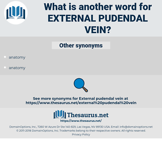 external pudendal vein, synonym external pudendal vein, another word for external pudendal vein, words like external pudendal vein, thesaurus external pudendal vein