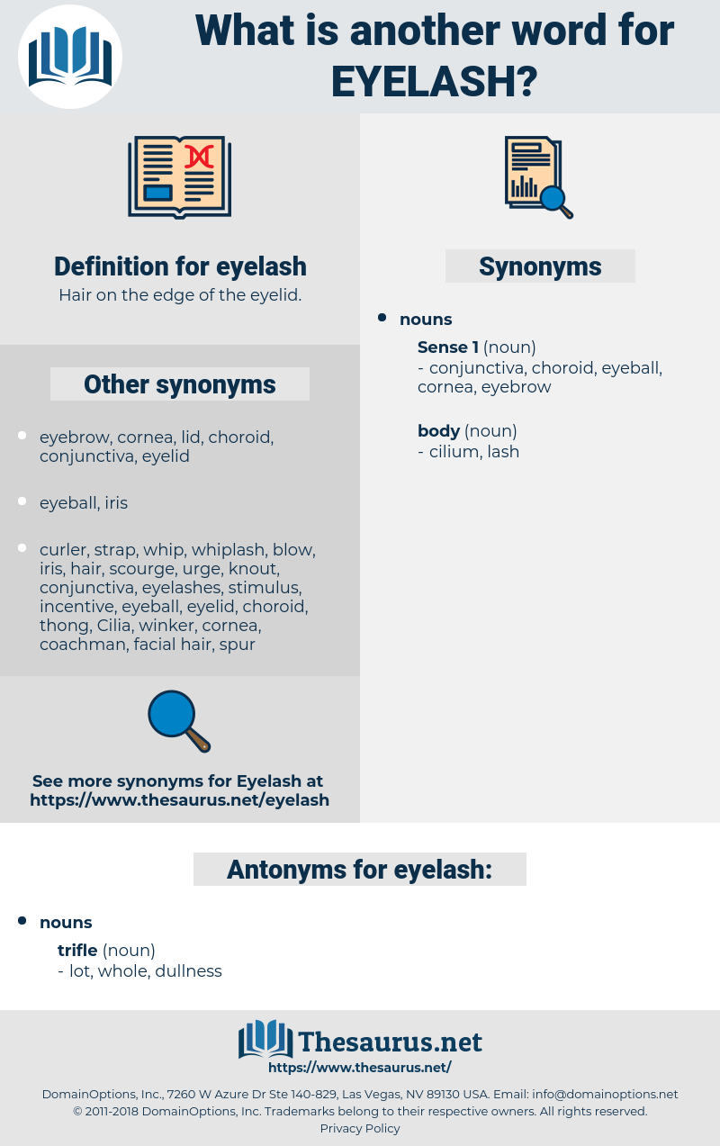 eyelash, synonym eyelash, another word for eyelash, words like eyelash, thesaurus eyelash