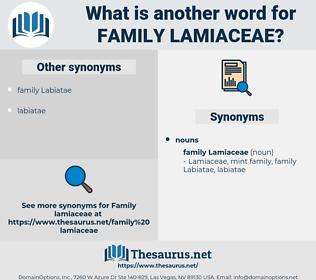 family Lamiaceae, synonym family Lamiaceae, another word for family Lamiaceae, words like family Lamiaceae, thesaurus family Lamiaceae