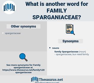 Family Sparganiaceae, synonym Family Sparganiaceae, another word for Family Sparganiaceae, words like Family Sparganiaceae, thesaurus Family Sparganiaceae