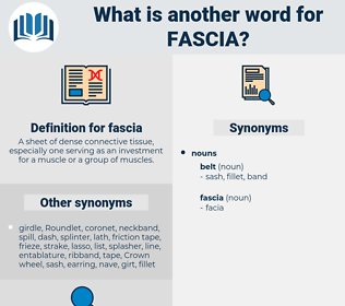 fascia, synonym fascia, another word for fascia, words like fascia, thesaurus fascia