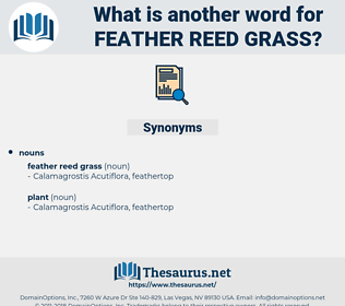 feather reed grass, synonym feather reed grass, another word for feather reed grass, words like feather reed grass, thesaurus feather reed grass