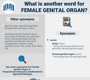 female genital organ, synonym female genital organ, another word for female genital organ, words like female genital organ, thesaurus female genital organ