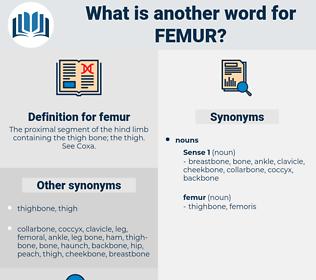 femur, synonym femur, another word for femur, words like femur, thesaurus femur