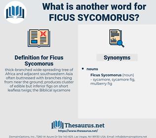 Ficus Sycomorus, synonym Ficus Sycomorus, another word for Ficus Sycomorus, words like Ficus Sycomorus, thesaurus Ficus Sycomorus