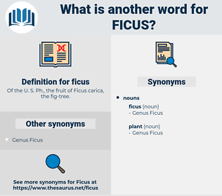 ficus, synonym ficus, another word for ficus, words like ficus, thesaurus ficus