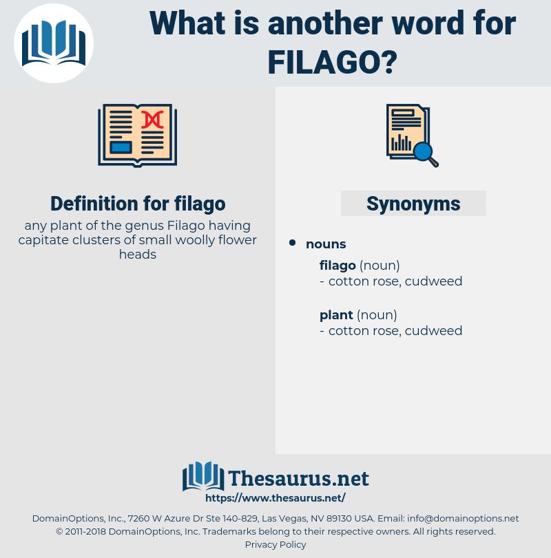 filago, synonym filago, another word for filago, words like filago, thesaurus filago