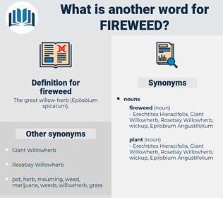 fireweed, synonym fireweed, another word for fireweed, words like fireweed, thesaurus fireweed