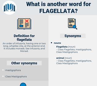 flagellata, synonym flagellata, another word for flagellata, words like flagellata, thesaurus flagellata