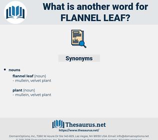 flannel leaf, synonym flannel leaf, another word for flannel leaf, words like flannel leaf, thesaurus flannel leaf