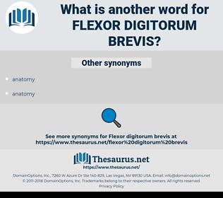 flexor digitorum brevis, synonym flexor digitorum brevis, another word for flexor digitorum brevis, words like flexor digitorum brevis, thesaurus flexor digitorum brevis