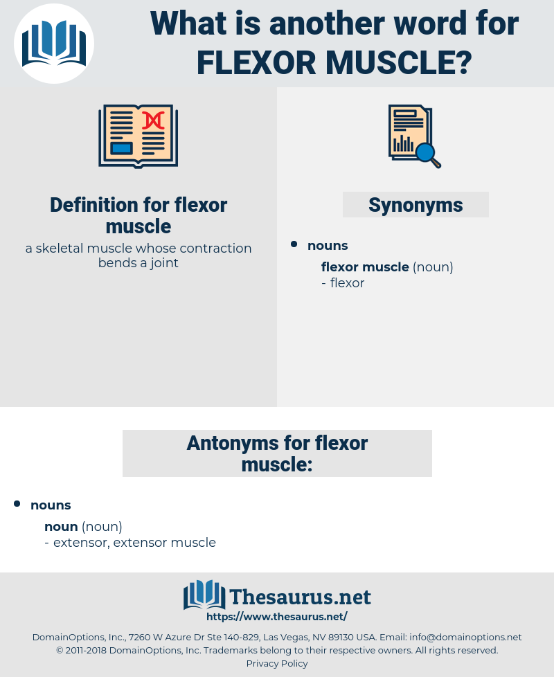flexor muscle, synonym flexor muscle, another word for flexor muscle, words like flexor muscle, thesaurus flexor muscle