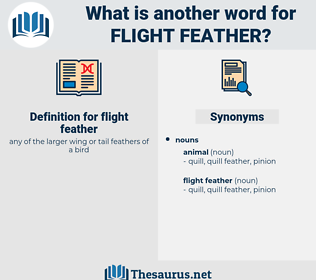 flight feather, synonym flight feather, another word for flight feather, words like flight feather, thesaurus flight feather