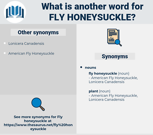 fly honeysuckle, synonym fly honeysuckle, another word for fly honeysuckle, words like fly honeysuckle, thesaurus fly honeysuckle