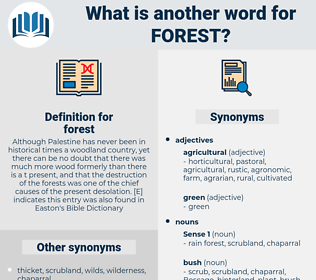 forest, synonym forest, another word for forest, words like forest, thesaurus forest