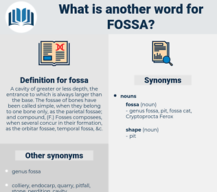 fossa, synonym fossa, another word for fossa, words like fossa, thesaurus fossa