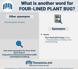 four-lined plant bug, synonym four-lined plant bug, another word for four-lined plant bug, words like four-lined plant bug, thesaurus four-lined plant bug