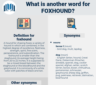 foxhound, synonym foxhound, another word for foxhound, words like foxhound, thesaurus foxhound