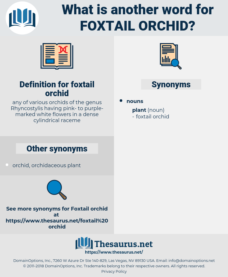 foxtail orchid, synonym foxtail orchid, another word for foxtail orchid, words like foxtail orchid, thesaurus foxtail orchid