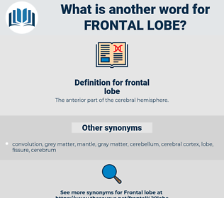 frontal lobe, synonym frontal lobe, another word for frontal lobe, words like frontal lobe, thesaurus frontal lobe