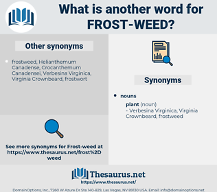 frost-weed, synonym frost-weed, another word for frost-weed, words like frost-weed, thesaurus frost-weed