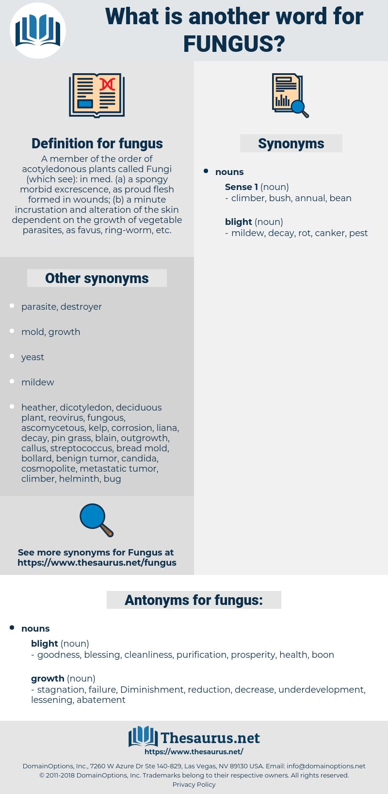 fungus, synonym fungus, another word for fungus, words like fungus, thesaurus fungus
