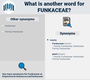 funkaceae, synonym funkaceae, another word for funkaceae, words like funkaceae, thesaurus funkaceae