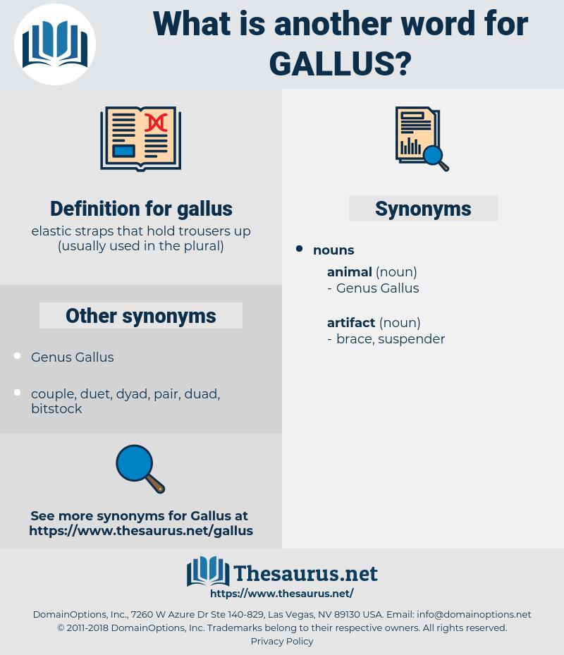 gallus, synonym gallus, another word for gallus, words like gallus, thesaurus gallus