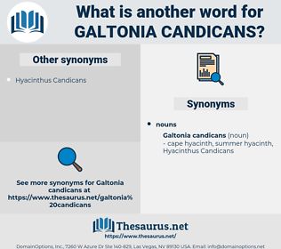 Galtonia Candicans, synonym Galtonia Candicans, another word for Galtonia Candicans, words like Galtonia Candicans, thesaurus Galtonia Candicans