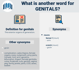 genitals, synonym genitals, another word for genitals, words like genitals, thesaurus genitals