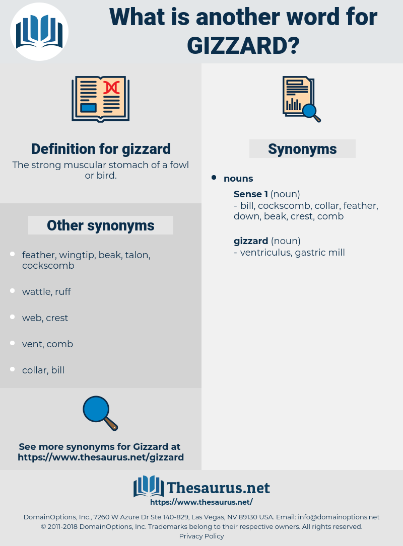gizzard, synonym gizzard, another word for gizzard, words like gizzard, thesaurus gizzard