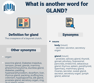 gland, synonym gland, another word for gland, words like gland, thesaurus gland